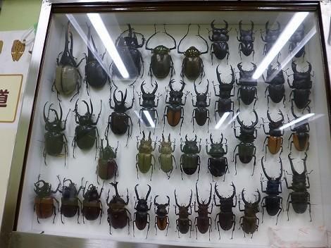 佐用町昆虫館