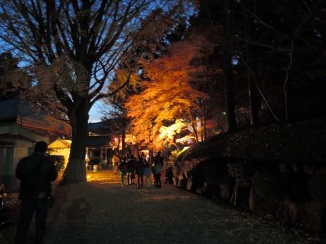 播州清水寺の紅葉ライトアップ [兵庫県加東市]
