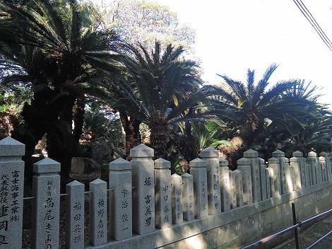 賀茂神社 ソテツ 兵庫県たつの市室津