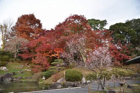 須磨離宮公園の「もみじ鑑賞会」へ行ってきました