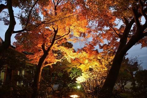 須磨離宮公園の「もみじ鑑賞会」