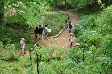 神戸市立森林植物園のあじさい