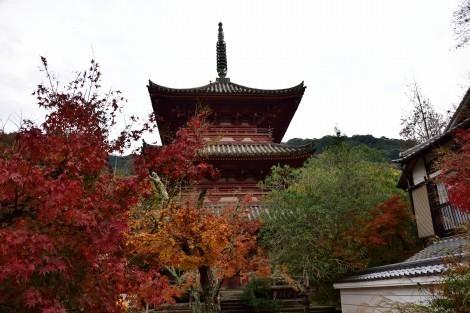 太山寺 (神戸市) の紅葉