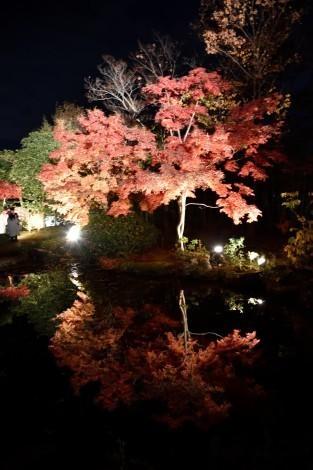 好古園の紅葉のライトアップ