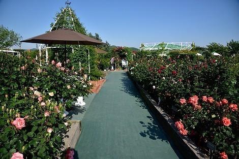 姫路ばら園