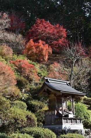 「達身寺」へ紅葉を見に行きました  [丹波もみじめぐり]
