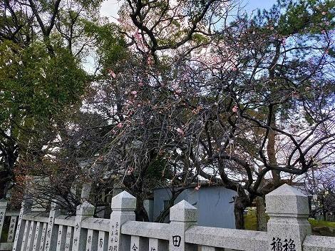 御厨神社へ梅を見に行ったのですが…[兵庫県明石市]
